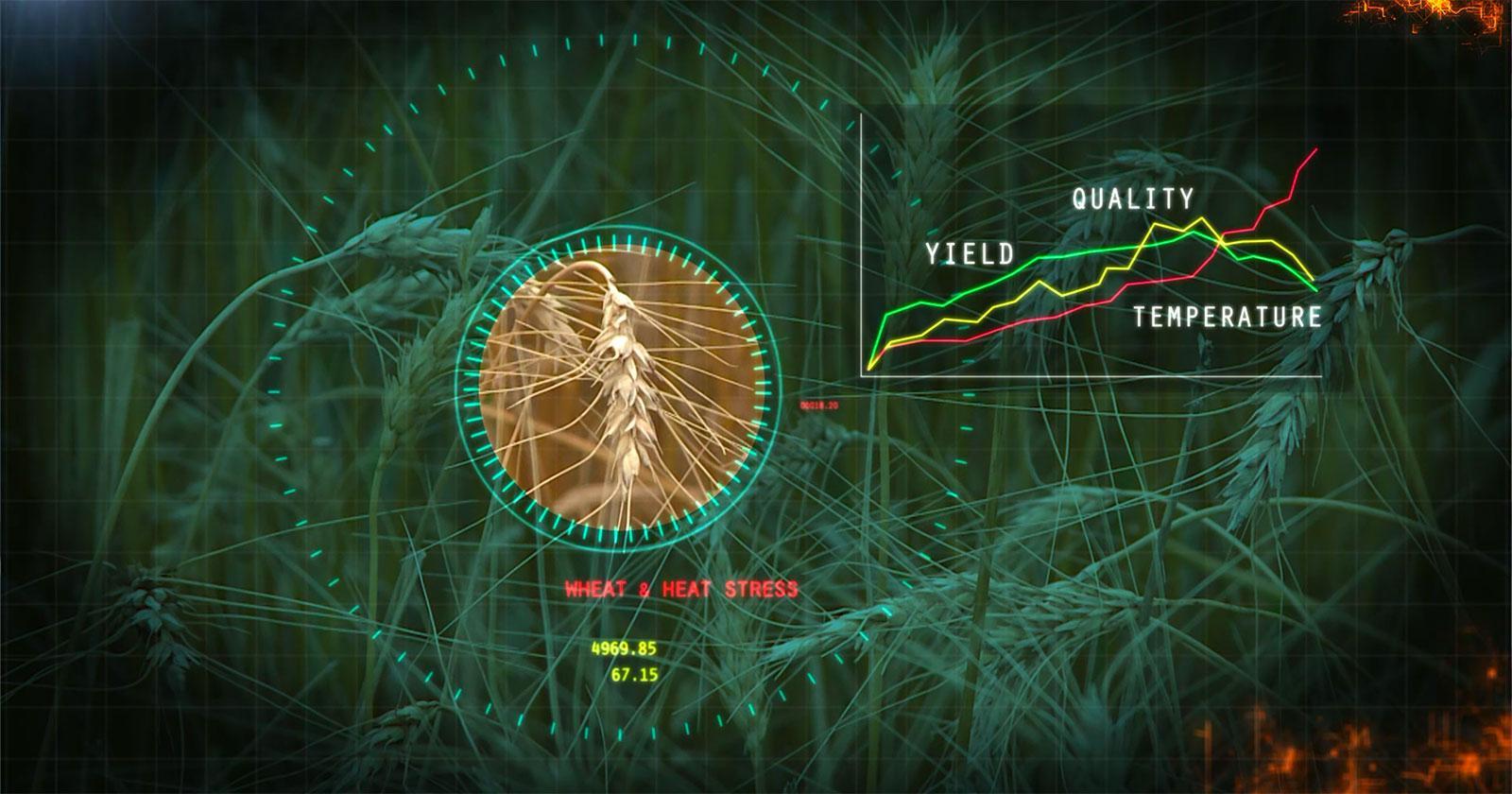 stress biology graphic